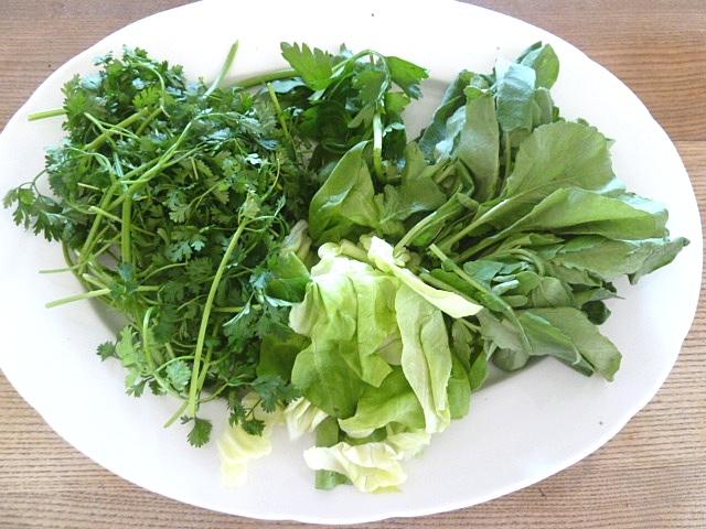 Kerbel, Grüner Salat, Petersilie und Radieschenkraut
