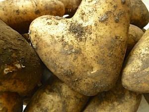 mehlige Kartoffeln vom Markt