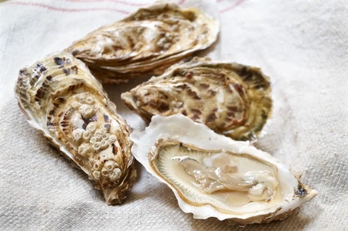 Große Austern auswählen