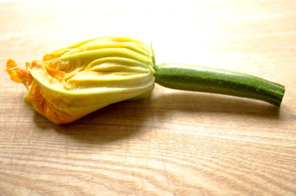 hier eine Blüte mit Hirn gefüllt