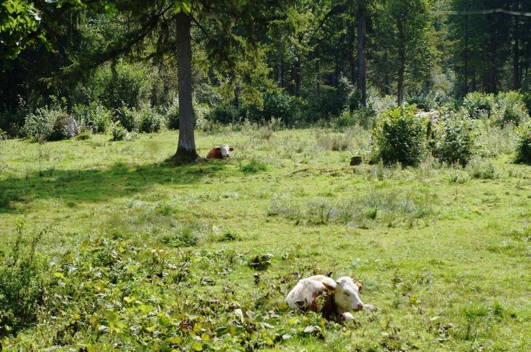 ein Idyll mit Überleitung zum nächsten Ziel: Naturkäserei