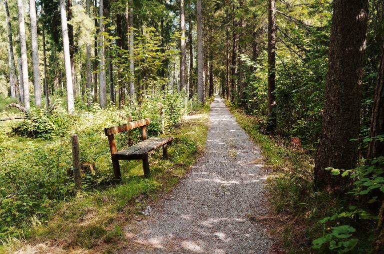 ein Wanderweg an der Weißach entlang