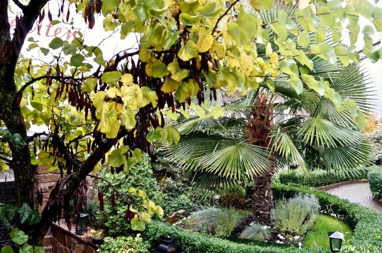 auch in Terlan wachsen Palmen