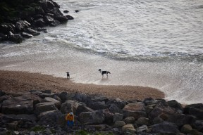 Boy and dogs on beach