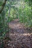 Honeylake Wood 2