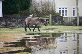 Pony, pools and reflection 2