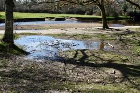 Pools, reflections, shadows, crocus