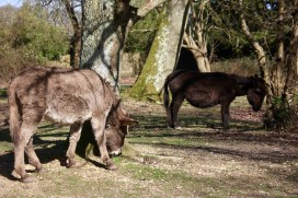 Donkeys scratching