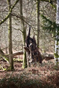 Stump 3