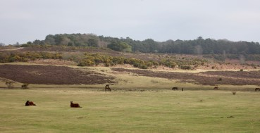 Landscape with ponies 1