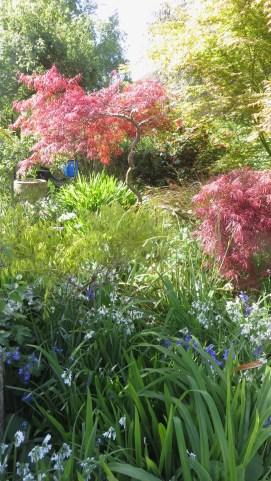 Garden view across Kitchen Bed 2