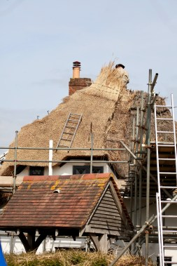 Thatching progress 5