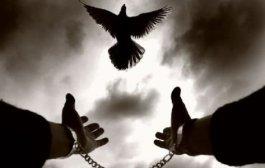 SİVİL TOPLUM KURULUŞU (STK) SİHİRİ – Efendi-Efraim Yıldız
