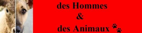 actions militantes pour les animaux Bandeau des hommes et des animaux