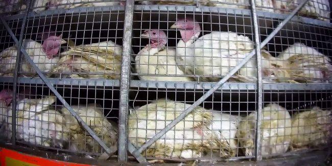 souffrance animale - hiver 2021