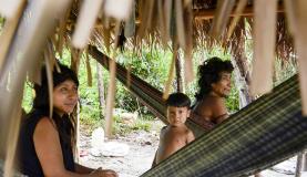 Awá-guajás estabelecem contato com índios isolados de reserva maranhense