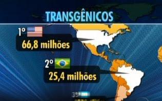 TRANSGÊNICOS - Brasil