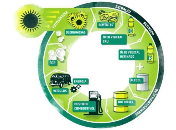 Ciclo-de-produção-do-biodiesel-brasileiro