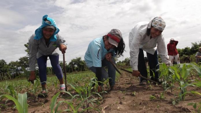Mulheres são maioria no campo - Foto: www.ipsnews.net