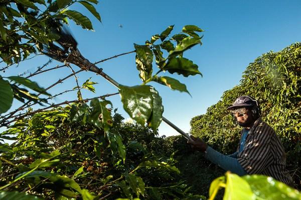 José Maria trabalha na colheita na Fazenda da Lagoa, localizada em Santo Antônio do Amparo, Minas Gerais