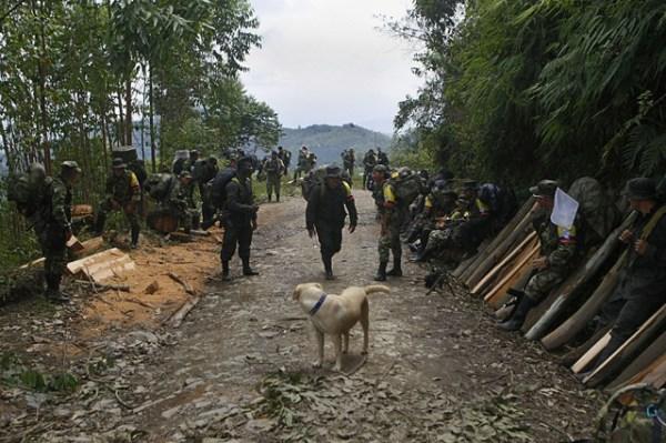 """BOG101. CAUCA (COLOMBIA), 31/01/2017.- Guerrilleros de las FARC descansan hoy, martes 31 de enero de 2017, durante la caminata final hacia una de las zonas veredales en las montañas del Cauca, cerca del sector de Robles (Colombia). Jorge Torres Victoria, """"Pablo Catatumbo"""", miembro del secretariado de las FARC, destacó el incumplimiento de parte del Gobierno, la falta de presencia del mismo en la zona y evidenció como esta es un lote casi baldío sin las mínimas normas sanitarias ni estructuras habitacionales o de otro tipo, resultando impropio para lo pactado y el bienestar de sus tropas. Igualmente insistió en la urgencia de presencia de delegados del gobierno para tomar decisiones al respecto. EFE/Christian Escobar Mora"""