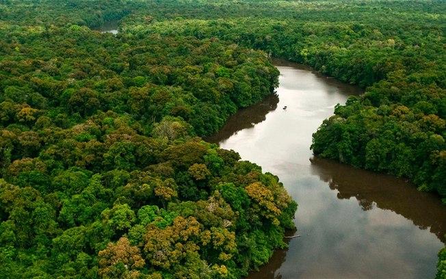 Quatro ativistas ambientais são assassinados toda semana no mundo; Brasil lidera