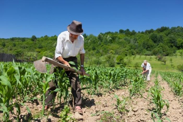 Novas leis trabalhistas podem aumentar desigualdade no campo