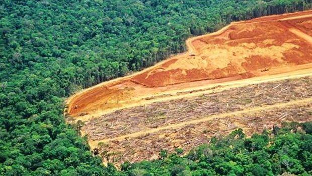 Região de fronteira e famílias pobres sofrem impacto com desmatamento