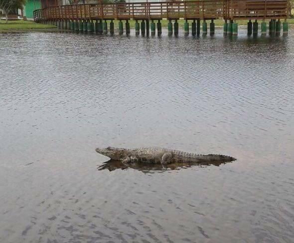 Esgoto in natura está sendo despejado na Lagoa da Chica, no Campeche