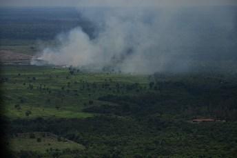 Reforma de pasto em área pecuarista - Créditos: Foto: Juan Doblas