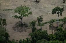 Área limítrofe entre área desmatada e vegetação intacta - Créditos: Foto: Juan Doblas