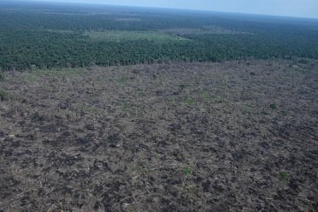 Áreas desmatadas muito grandes e abertas de forma rápida são características do desmatamento especulativo - Créditos: Foto: Juan Doblas