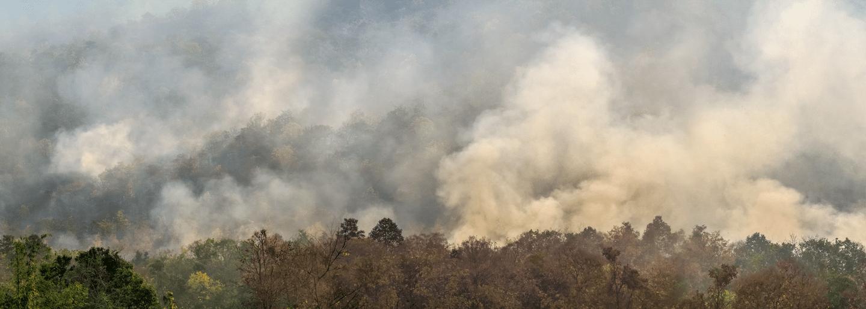 Incendios en la Amazonía: ¿cómo afectan a las compañías?