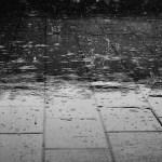 Impromptus: lluvia de otoño (El ciclo de la vida)