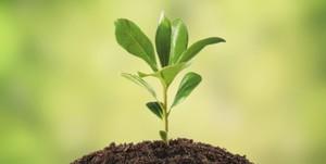 Plantar un árbol…