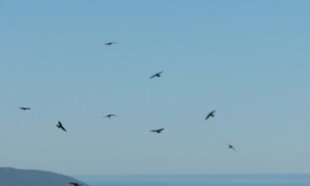Pájaros al vuelo