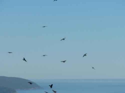 Soliloquio en vuelo raso