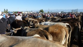 """Il y a foule au """"rayon"""" des vaches!"""
