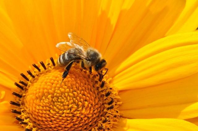 Fluctuaciones en las colonias de abejas: ¿Un fenómeno causado por plaguicidas?