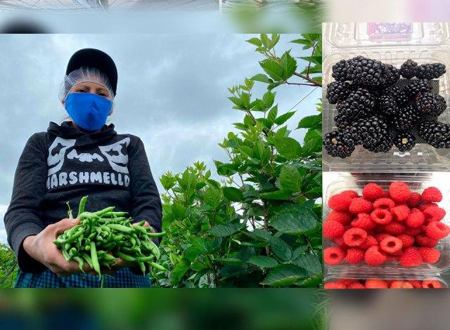 Presentan protocolo de salud y seguridad para prevención del coronavirus en el sector agropecuario