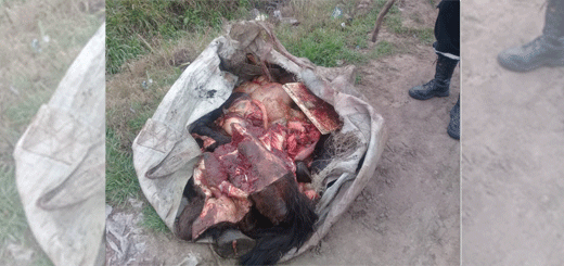 Encontraron pedazos de un caballo en un descampado.