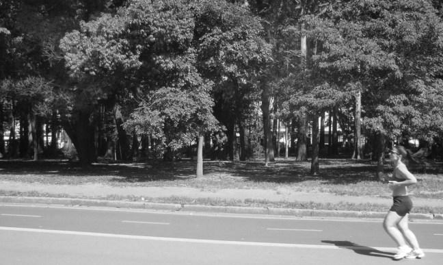 km 6 - Parque do Ibirapuera