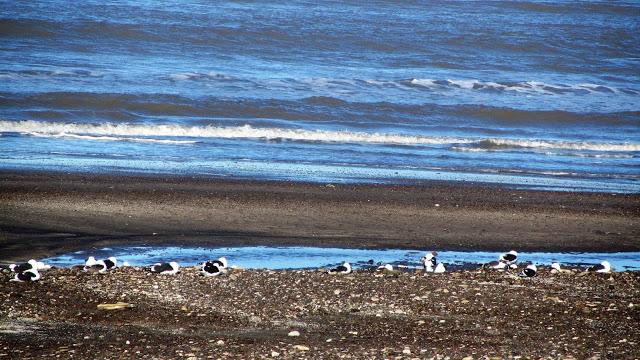 Playa El Condor