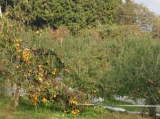 A mixed orchard on the side of the path