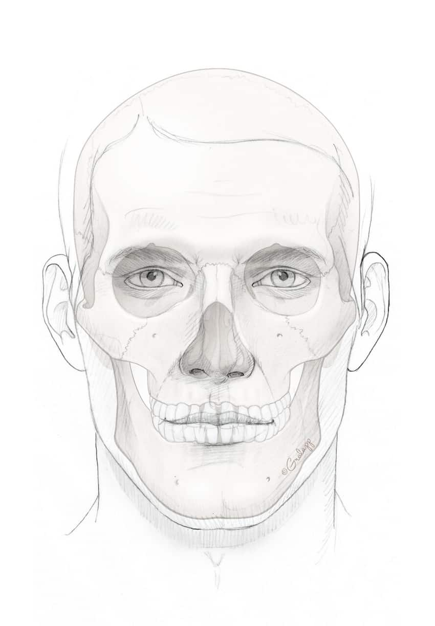 Male face and skeleton. Image credit: Chris Gralapp