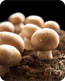 Als paddenstoelen schieten ze uit de grond