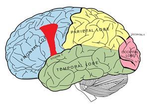 neurotischtrekje