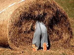 zoeken-naald-hooiberg