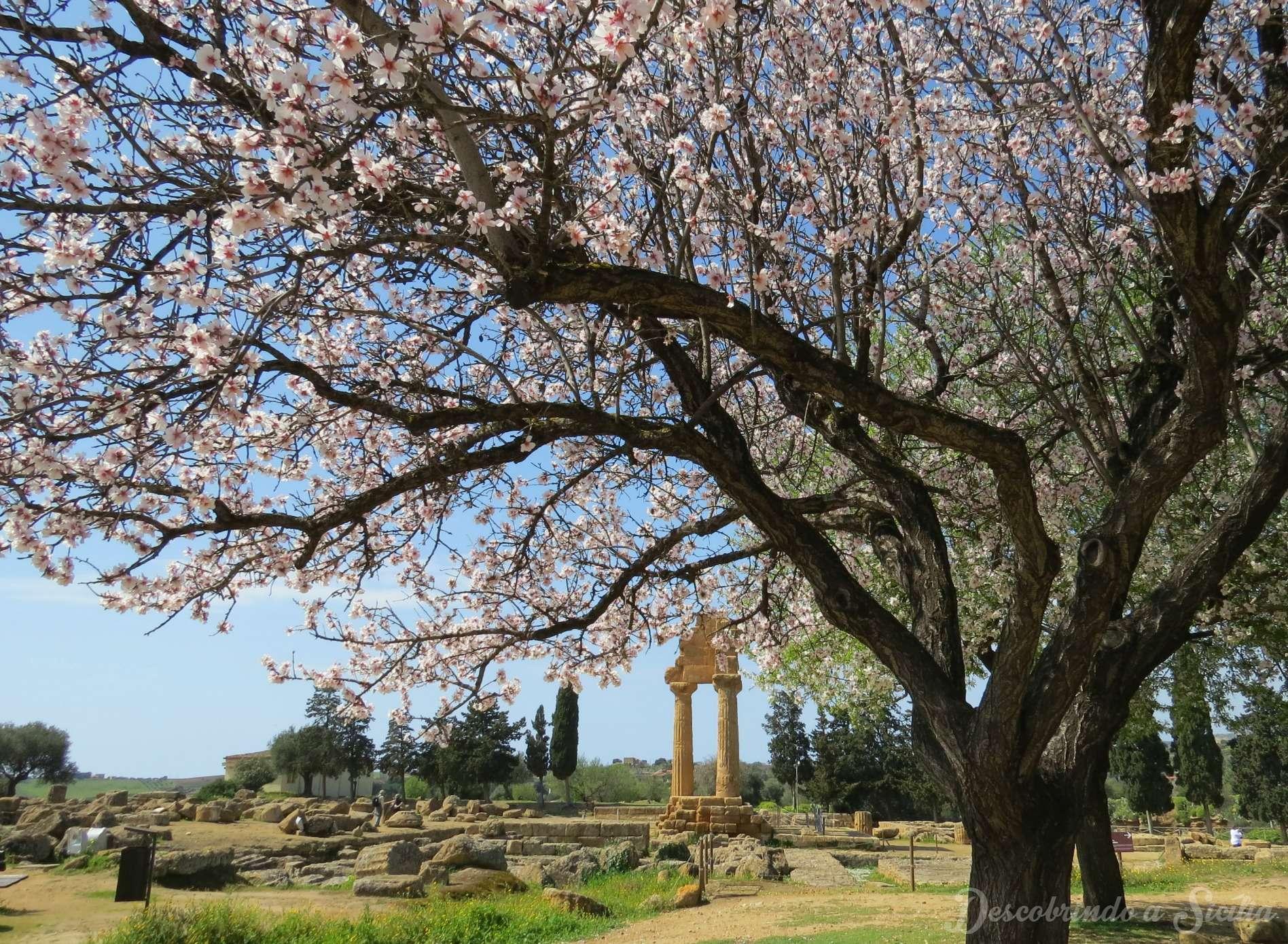 primavera na sicilia