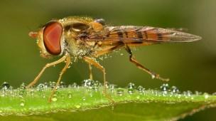 picada de insetos saúde